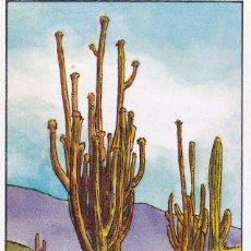 Coleccionismo Cromos antiguos: CROMO LOS RECORDS (ROS). Nº 47. EL CACTUS MAS GRANDE. SAGUARO. Lote 68559977