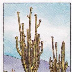 Coleccionismo Cromos antiguos: CROMO LOS RECORDS (ROS). Nº 47. EL CACTUS MAS GRANDE. SAGUARO. Lote 68560069