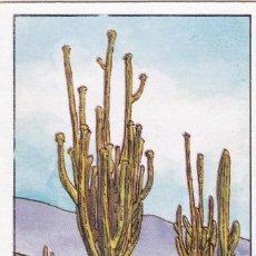 Coleccionismo Cromos antiguos: CROMO LOS RECORDS (ROS). Nº 47. EL CACTUS MAS GRANDE. SAGUARO. Lote 68560161