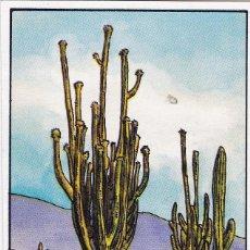 Coleccionismo Cromos antiguos: CROMO LOS RECORDS (ROS). Nº 47. EL CACTUS MAS GRANDE. SAGUARO. Lote 68560209