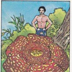 Coleccionismo Cromos antiguos: CROMO LOS RECORDS (ROS). Nº 51. LA FLOR MAS GRANDE. LIRIO HEDIONDO. Lote 68560669