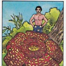 Coleccionismo Cromos antiguos: CROMO LOS RECORDS (ROS). Nº 51. LA FLOR MAS GRANDE. LIRIO HEDIONDO. Lote 68560745