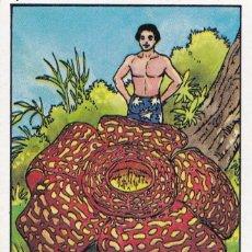 Coleccionismo Cromos antiguos: CROMO LOS RECORDS (ROS). Nº 51. LA FLOR MAS GRANDE. LIRIO HEDIONDO. Lote 68560809