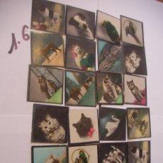 Coleccionismo Cromos antiguos: GRAN LOTE DE ANTIGUOS CROMOS DE ANIMALES . Lote 94691267