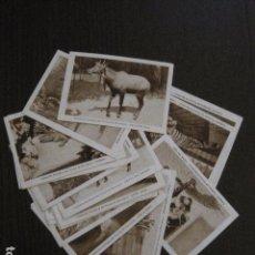 Coleccionismo Cromos antiguos: COLECCION ZOOLOGICA PARQUE BARCELONA- COL. COMPLETA 20 CROMOS-CH. COMET -VER FOTOS - (V-12.444). Lote 102007255