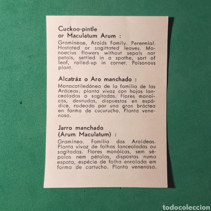 Cromo Explícito En Inglés Castellano Y Portugué Comprar Cromos