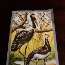 Coleccionismo Cromos antiguos: MAGA ANIMALES Y MINERALES 105. Lote 126071087
