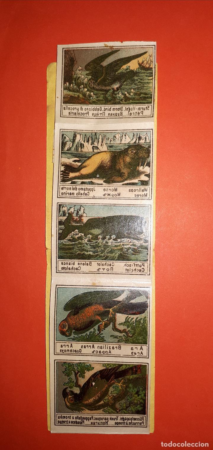 Coleccionismo Cromos antiguos: ANTIGUO ALBUM DE CALCOMANÍAS SIGLO XIX - Foto 2 - 138905342