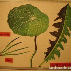 Coleccionismo Cromos antiguos: CROMO ALBUM ZOOLOGIA Y BOTANICA DE MAGA NUMERO 287 (NUEVO ). Lote 143112630
