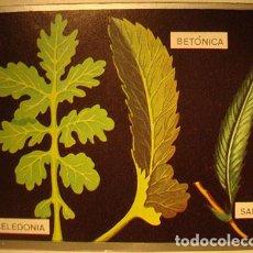 Coleccionismo Cromos antiguos: CROMO ALBUM ZOOLOGIA Y BOTANICA DE MAGA NUMERO 288 (NUEVO ). Lote 143112634