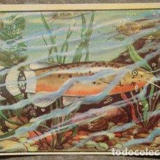 Coleccionismo Cromos antiguos: CROMO ALBUM Nº 2 A TRAVES DE AFRICA DE CHOCOLATES BATANGA SERIE VI NUMERO 5 (NUNCA PEGADO). Lote 143531410