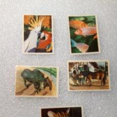 Coleccionismo Cromos antiguos: LOTE DE 5 CROMOS UN DIA EN EL ZOO 16 59 32 2 4. Lote 145646610