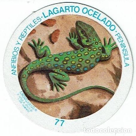 COLECCIÓN CROMOS CROMOJUEGO NUESTROS ANIMALES CROMO TAZO 77 LAGARTO OCELADO ANFIBIOS Y REPTILES (Coleccionismo - Cromos y Álbumes - Cromos Antiguos)