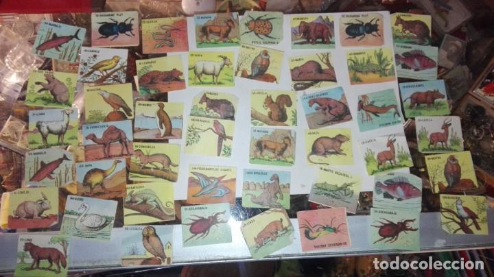 48 CROMOS ANIMALES NO SE DE QUE ALBUN SON (Coleccionismo - Cromos y Álbumes - Cromos Antiguos)