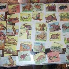 Coleccionismo Cromos antiguos: 48 CROMOS ANIMALES NO SE DE QUE ALBUN SON. Lote 147299934