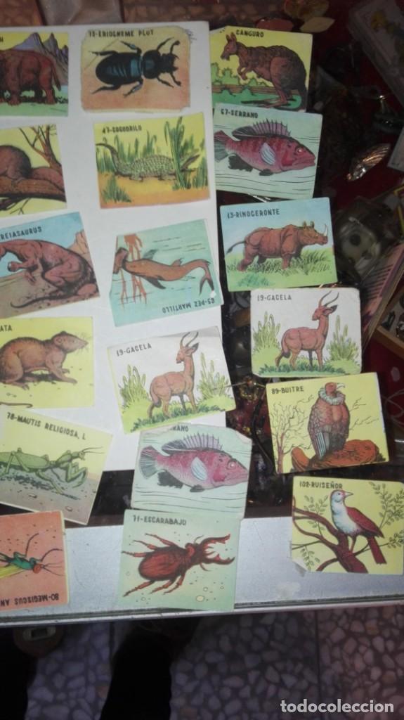 Coleccionismo Cromos antiguos: 48 CROMOS ANIMALES NO SE DE QUE ALBUN SON - Foto 2 - 147299934