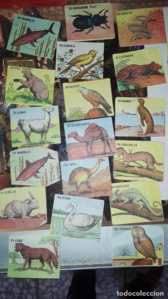 Coleccionismo Cromos antiguos: 48 CROMOS ANIMALES NO SE DE QUE ALBUN SON - Foto 3 - 147299934
