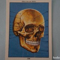 Coleccionismo Cromos antiguos: CROMO DE CIENCIAS NATURALES SIN PEGAR Nº 210 DEL ALBUM CIENCIAS NATURALES DE EASO. Lote 151876630