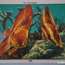 Coleccionismo Cromos antiguos: CROMO DE CIENCIAS NATURALES SIN PEGAR Nº 197 DEL ALBUM CIENCIAS NATURALES DE EASO. Lote 151876986