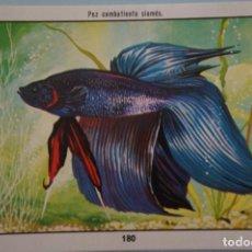 Coleccionismo Cromos antiguos: CROMO DE CIENCIAS NATURALES SIN PEGAR Nº 180 DEL ALBUM CIENCIAS NATURALES DE EASO. Lote 151877602