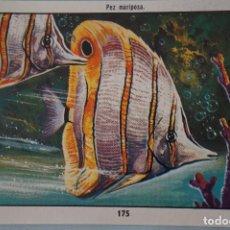 Coleccionismo Cromos antiguos: CROMO DE CIENCIAS NATURALES SIN PEGAR Nº 175 DEL ALBUM CIENCIAS NATURALES DE EASO. Lote 151877802