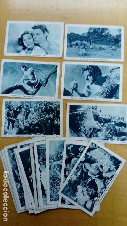 COLECCIÓN DE 21 CROMOS TARZAN Y SU COMPAÑERA (Coleccionismo - Cromos y Álbumes - Cromos Antiguos)