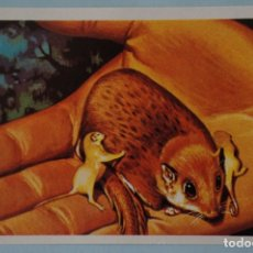 Collectionnisme Cartes à collectionner anciennes: CROMO DE EL MAS Y EL MENOS SIN PEGAR Nº 54 AÑO 1975 DEL ALBUM EL MAS Y EL MENOS DE RUIZ ROMERO. Lote 207805266