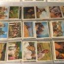 Coleccionismo Cromos antiguos: 90 CROMOS TARZAN EL JUSTICIERO ~ CHOCOLATES LAS COMAS -1970 . Lote 168237736