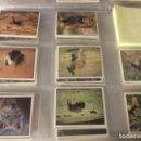 Coleccionismo Cromos antiguos: 280 CROMOS WWF - ANIMALES PARA SALVAR - PANINI . Lote 168238092