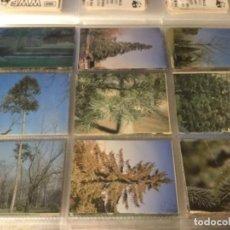 Coleccionismo Cromos antiguos: 340 CROMOS ÁRBOLES DE LA VILLA DE MADRID. Lote 168238188