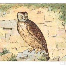 Coleccionismo Cromos antiguos: AVES AMATLLER BARCELONA AÑOS 20-30 LECHUZA. Lote 177415275