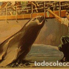 Coleccionismo Cromos antiguos: CROMO ALBUM NUESTRO MUNDO 3 DE BIMBO NUMERO 52 (NUEVO). Lote 181819050