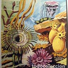 Coleccionismo Cromos antiguos: CROMOS ALBUM MUNDO AMENO DE BRUGUERA NUMERO 15 (NUEVO). Lote 182653162