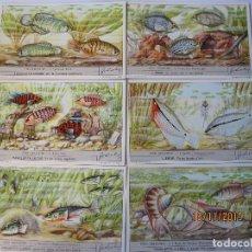 Coleccionismo Cromos antiguos: COLECCIÓN COMPLETA 6 CROMOS LIEBIG SERIE PECES NIDIFICADORES Nº 177. Lote 184086402