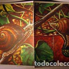 Coleccionismo Cromos antiguos: CROMO ALBUM CIENCIAS DE MAGA NUMERO 130 (NUEVO). Lote 185357065