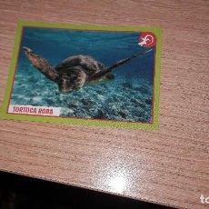 Coleccionismo Cromos antiguos: ANIMALES 2019 CROMO 173. Lote 187960847