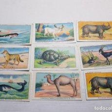 Coleccionismo Cromos antiguos: CROMOS CHOCOLATES MARCOS TONDA LOTE ZOOLOGIA LOTE 24. Lote 194224270