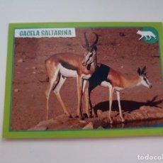 Coleccionismo Cromos antiguos: CROMO Nº 172 EL GRAN ÁLBUM DEL MUNDO ANIMAL 2019 ANIMALES 2019. Lote 194327077