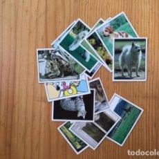 Coleccionismo Cromos antiguos: 17 CROMOS ANIMALES DOMESTICOS PANINI, DIFERENTES NUMEROS QUE DETALLO. Lote 194678728