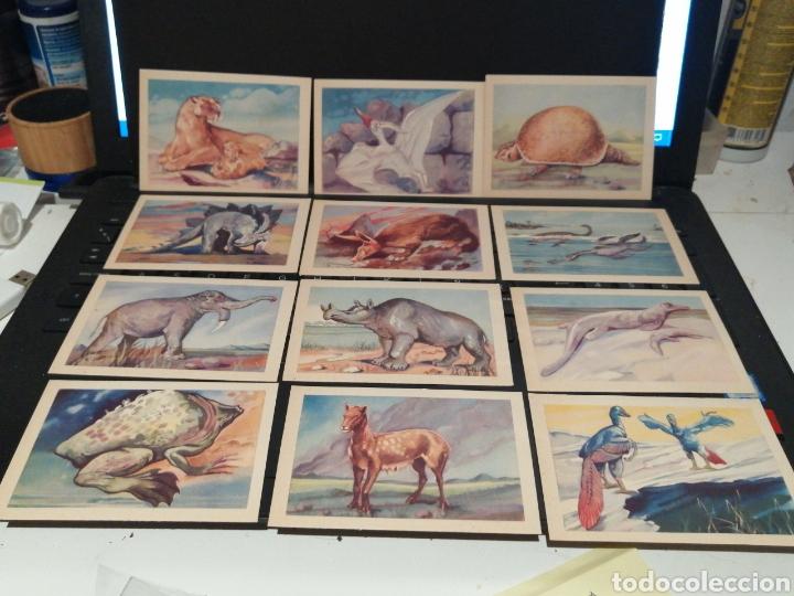 Coleccionismo Cromos antiguos: Cromos ANIMALES PREHISTÒRICOS DOS SERIES COMPLETAS - Foto 2 - 194906515