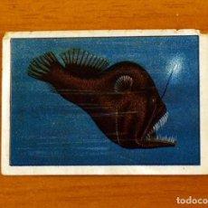 Coleccionismo Cromos antiguos: SERIE 9 - CROMO Nº 8 - ÁLBUM NESTLÉ MARAVILLAS DEL MUNDO 1955 . Lote 195464106