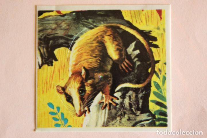CROMO DE ANIMALES SALVAJES SIN PEGAR Nº 254 AÑO 1982 DEL ALBUM ANIMALES SALVAJES DE DIDEC (Coleccionismo - Cromos y Álbumes - Cromos Antiguos)