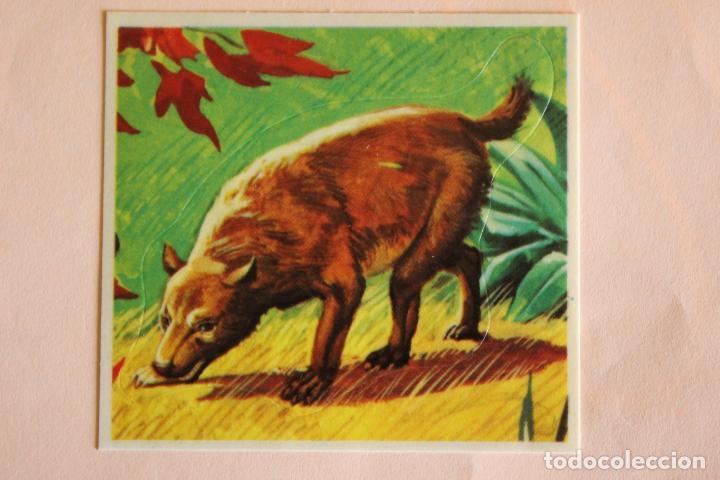 CROMO DE ANIMALES SALVAJES SIN PEGAR Nº 256 AÑO 1982 DEL ALBUM ANIMALES SALVAJES DE DIDEC (Coleccionismo - Cromos y Álbumes - Cromos Antiguos)