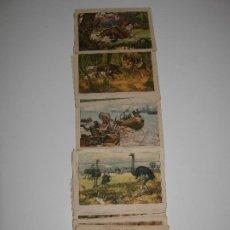 Coleccionismo Cromos antiguos: 35 CROMOS DE 40 DE EL HOMBRE Y LAS FIERAS. Lote 202875277