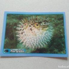 Coleccionismo Cromos antiguos: Nº 303 PEZ GLOBO - CROMO ANIMALES PANINI GRAN ÁLBUM MUNDO ANIMAL 2013 COLECCIÓN SOLIDARIA. Lote 206295370