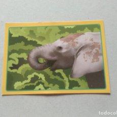 Coleccionismo Cromos antiguos: Nº 539 ELEFANTE - CROMO ANIMALES PANINI GRAN ÁLBUM MUNDO ANIMAL 2013 COLECCIÓN SOLIDARIA. Lote 206295482