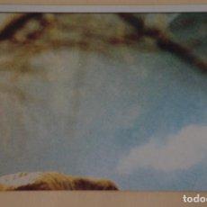Coleccionismo Cromos antiguos: E.T. EL EXTRATERRESTRE SIN PEGAR Nº 16 AÑO 1982 DEL ALBUM E.T. EL EXTRATERRESTRE DE TOPPS. Lote 206788058