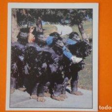 Coleccionismo Cromos antiguos: CROMO DE POWER RANGERS SIN PEGAR Nº 91 AÑO 1996 DEL ALBUM POWER RANGERS DE PANINI. Lote 213612531