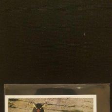 Coleccionismo Cromos antiguos: PANINI ANIMALES 2020 - Nº 19. Lote 221709250
