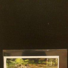 Coleccionismo Cromos antiguos: PANINI ANIMALES 2020 - Nº 20. Lote 221709351